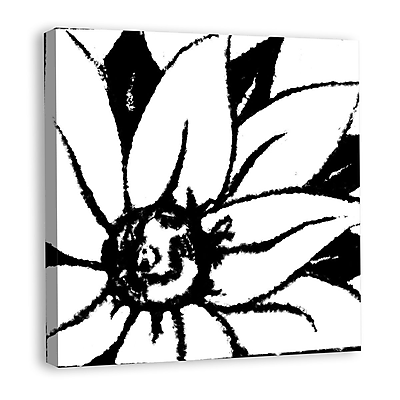 Melissa Van Hise Bloomy Burst III Graphic Art on Wrapped Canvas; Black