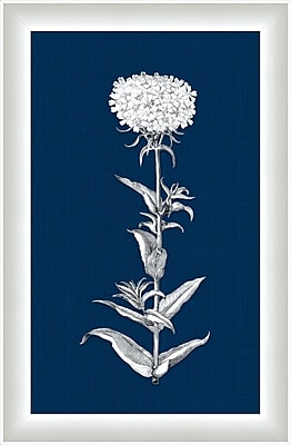 Melissa Van Hise White Flora V Framed Graphic Art