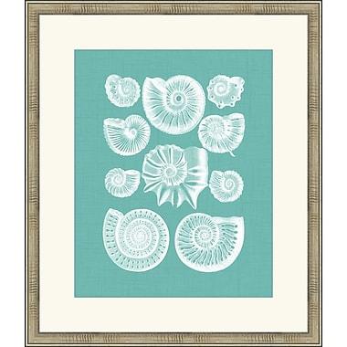 Melissa Van Hise Colorful Shells III Framed Graphic Art; Spa Blue
