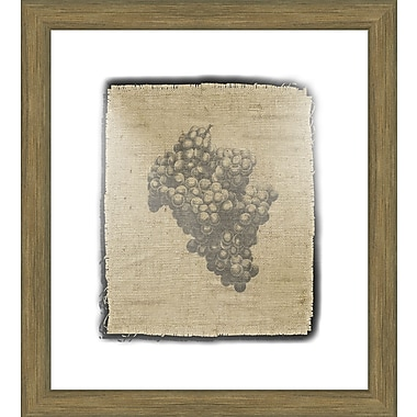 Melissa Van Hise Grapes Framed Graphic Art; Black