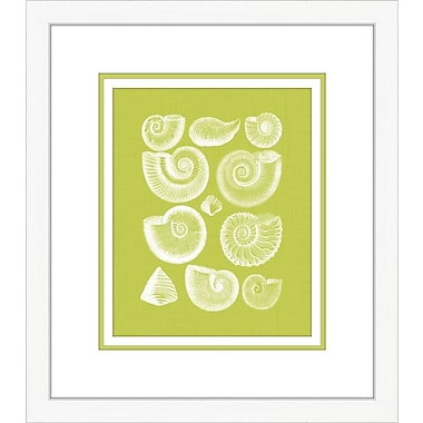 Melissa Van Hise Coquillage I Framed Graphic Art; Green