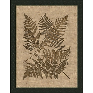 Melissa Van Hise Polypodies Ferns Framed Graphic Art