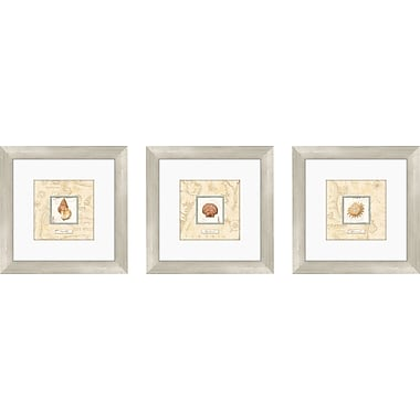 PTM Images Sea Treasure 3 Piece Framed Graphic Art Set