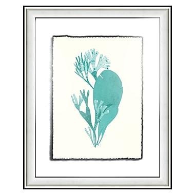 Melissa Van Hise Sealife IV Framed Graphic Art