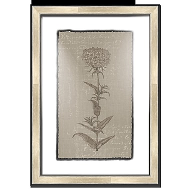 Melissa Van Hise Floral Stems w/ Writing I Framed Graphic Art