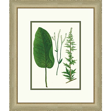 Melissa Van Hise Emerald Foliage lV Framed Graphic Art