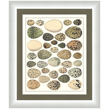 Melissa Van Hise Eggs ll Framed Graphic Art