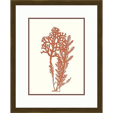 Melissa Van Hise Sealife III Framed Graphic Art in Sienna