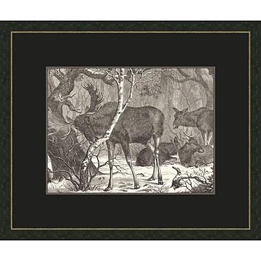 Melissa Van Hise Moose In The forest Framed Graphic Art