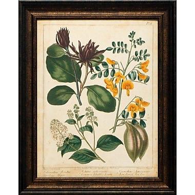 North American Art Non Embellished Enchanted Garden I by Suydenham Edwards Framed Graphic Art