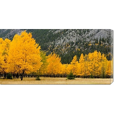 Global Gallery 'Autumn Aspens in Meadow' by Don Johnston Photographic Print on Wrapped Canvas