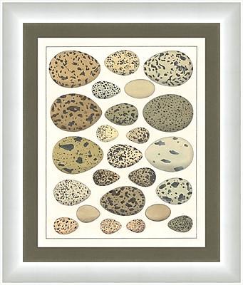 Melissa Van Hise Eggs I Framed Graphic Art