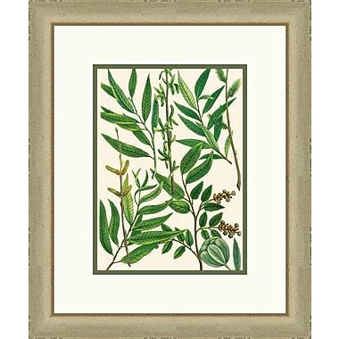 Melissa Van Hise Emerald Foliage I Framed Graphic Art