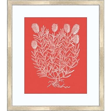 Melissa Van Hise Floral Impression I Framed Graphic Art; Watermelon