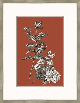 Melissa Van Hise Buchoz Flowers III Framed Graphic Art
