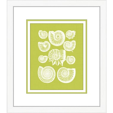 Melissa Van Hise Coquillage III Framed Graphic Art; Green