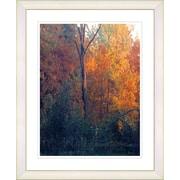 Studio Works Modern ''Vermont Forest - Orange'' by Zhee Singer Framed Graphic Art; White