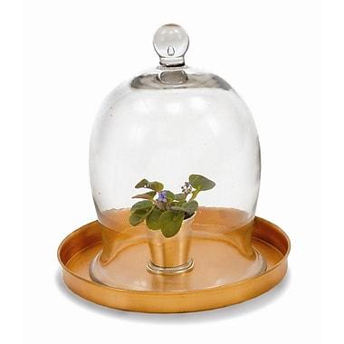 ACHLA Glass Terrarium