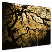 """ArtWall """"Gold Rendition: Japanese Tree"""" 3 Piece Gallery Wrapped Canvas Art By John Black, 36"""" x 54"""""""