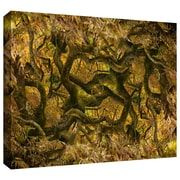 """ArtWall """"Acer Palmatum Dissectum Ornatum"""" Gallery Wrapped Canvas Arts By Cora Niele"""