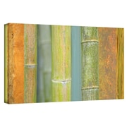 "ArtWall ""Bamboo Green Orange"" Gallery Wrapped Canvas Arts By Cora Niele"