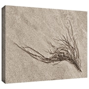 "ArtWall ""Beach Find I"" Gallery Wrapped Canvas Arts By Cora Niele"