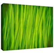 """ArtWall """"Hordeum"""" Gallery Wrapped Canvas Art By Cora Niele, 32"""" x 48"""""""