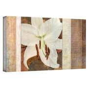 """ArtWall """"Ivory"""" Gallery Wrapped Canvas Arts By Cora Niele"""