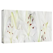 "ArtWall ""Lily Landscape"" Gallery Wrapped Canvas Arts By Cora Niele"