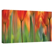 "ArtWall ""Orange Tulip"" Gallery Wrapped Canvas Arts By Cora Niele"