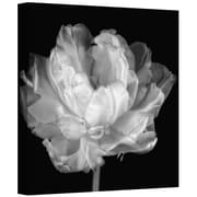 """ArtWall """"Tulipa Double Black and White I"""" Gallery Wrapped Canvas Art By Cora Niele, 14"""" x 14"""""""