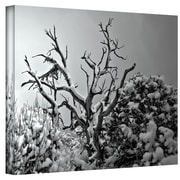 """ArtWall """"Wood and Nail"""" Wrapped Canvas Art By Mark Ross, 24"""" x 18"""""""