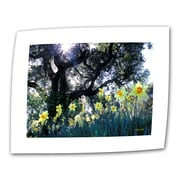 """ArtWall """"Daffodils and The Oak"""" Flat/Rolled Canvas Art By Kathy Yates, 24"""" x 36"""""""