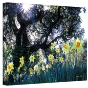 """ArtWall """"Daffodils and The Oak"""" Gallery Wrapped Canvas Art By Kathy Yates, 32"""" x 48"""""""