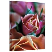"ArtWall ""Mauve and Peach Roses"" Gallery Wrapped Canvas Art By Kathy Yates, 24"" x 36"""
