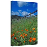 "ArtWall ""Poppies and The Fence"" Gallery Wrapped Canvas Arts By Kathy Yates"
