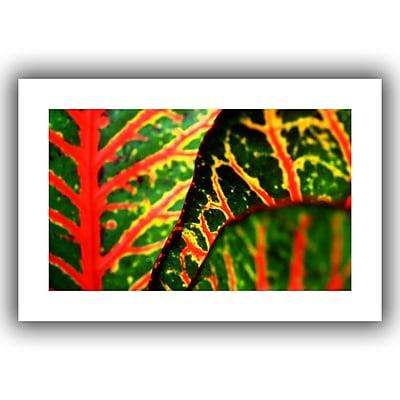 "ArtWall ""Croton Abstract"" Unwrapped Canvas Art By Kathy Yates, 32"" x 48"""