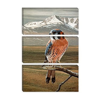iCanvas 'American Kestrel' by Ron Parker Painting Print on Canvas; 26'' H x 18'' W x 0.75'' D