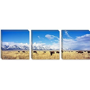 iCanvas Panoramic Bison Herd, Grand Teton National Park, Wyoming Photographic Print on Canvas