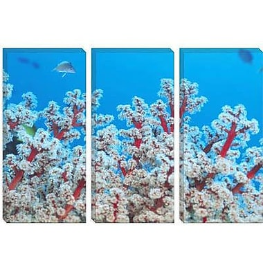 iCanvas Marine and Ocean Gorgonian Coral Photographic Print on Canvas; 18'' H x 26'' W x 1.5'' D