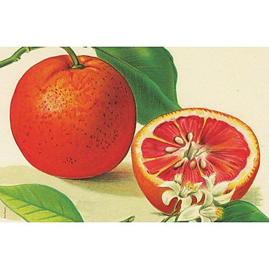 Belle Banquet Oranges Placemat (Set of 6)