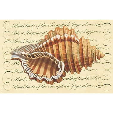 Belle Banquet Conch Placemat (Set of 6)