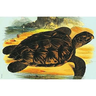 Belle Banquet Sea Turtle Placemat (Set of 6)