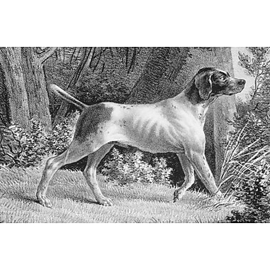 Belle Banquet Hound Placemat (Set of 6)