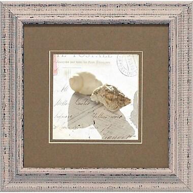Artistic Reflections Postal Shells I by Schenck, Deborah Framed Graphic Art