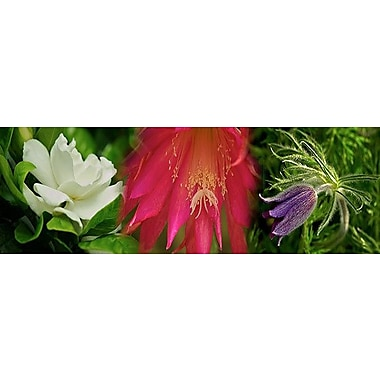 iCanvas Panoramic 'White, Pink and Purple Flowers' Photographic Print on Canvas