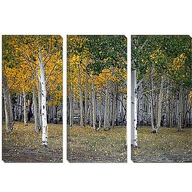 iCanvas 'Dixie Forest, Utah' by J.D. McFarlan Painting Print on Canvas; 26'' H x 40'' W x 0.75'' D