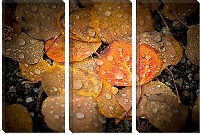 iCanvas 'Fall Rains' by Dan Ballard Photographic Print on Canvas; 40'' H x 60'' W x 1.5'' D