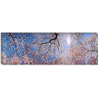 iCanvas Panoramic Washington D.C. Photographic Print on Canvas; 16'' H x 48'' W x 0.75'' D