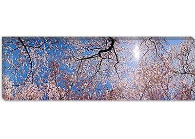 iCanvas Panoramic Washington D.C. Photographic Print on Canvas; 30'' H x 90'' W x 1.5'' D